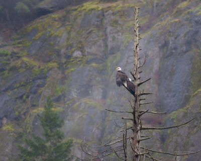 Eagles ,Goldstream Park